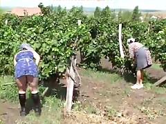 Paraszt picsák - dugás a szőlősben
