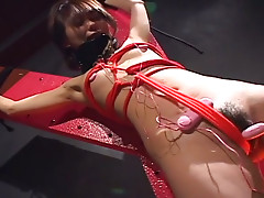 Provocative Japanese hoe Maho Sawai is filming in BDSM porn video